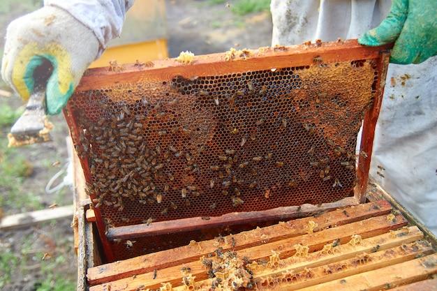 Un apicoltore in un vestito che controlla i telai con favi e miele