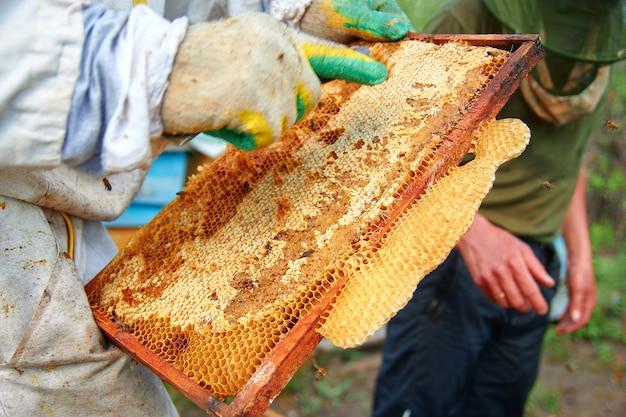 Un apicoltore in tuta controlla i telai a nido d'ape e pulisce il miele