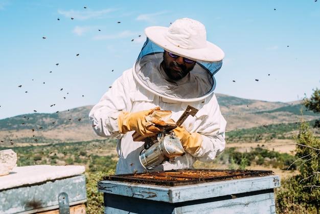 L'apicoltore che lavora raccoglie il miele