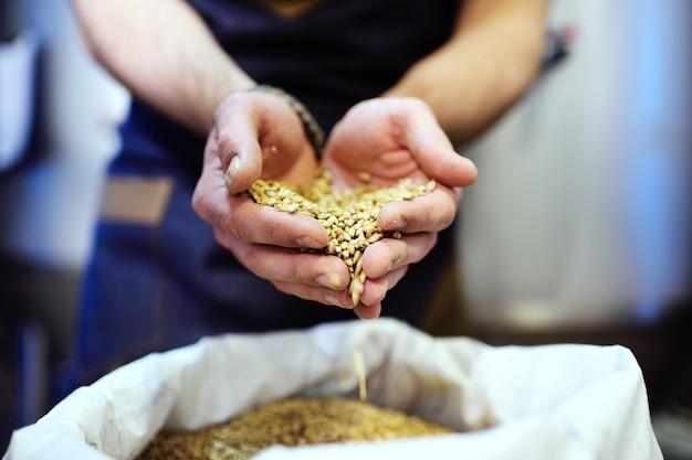 Primo piano del malto di birra in mani maschii