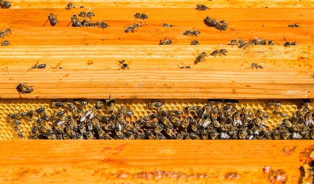 Api in un favo che producono miele