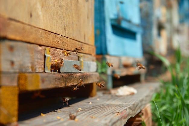 Le api volano vicino all'alveare