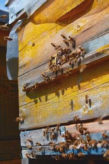 Le api volano vicino a un alveare di legno