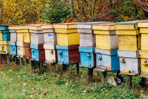 Api che volano vicino all'allevamento di alveari che lavora alle api