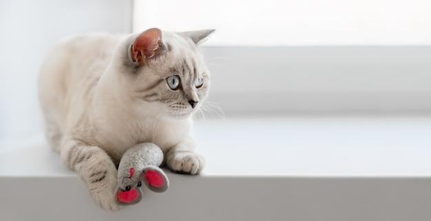 Un simpatico gatto scozzese beige con un topo giocattolo divertente è sdraiato sul davanzale bianco