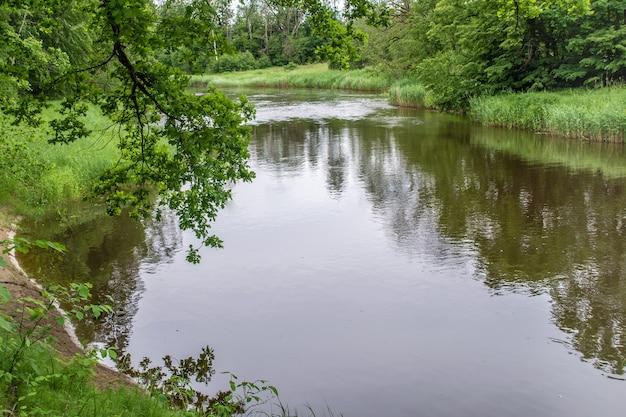 Ansa del fiume ogre. costa ricoperta di canne. i rami degli alberi pendono sull'acqua. natura verde dell'estate lettonia.