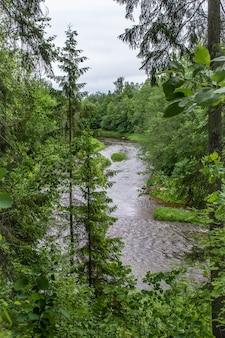 Ansa del fiume ogre. parte superiore degli alberi di abete rosso. tempo nuvoloso il giorno d'estate. lettonia natura.