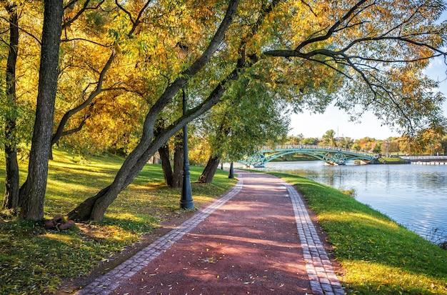 Curve di rami di un albero con fogliame autunnale dorato e un sentiero per passeggiate a tsaritsyno a mosca
