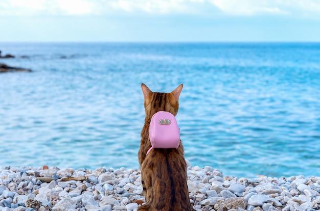 Gatto bengala con un piccolo zaino rosa sulla schiena sullo sfondo del mare.