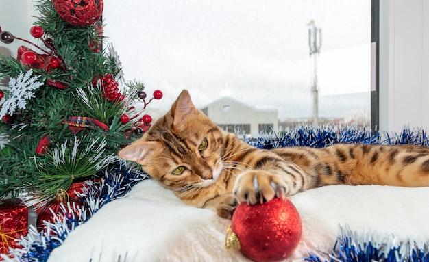 Il gattino del bengala gioca con le decorazioni di natale vicino alla finestra.