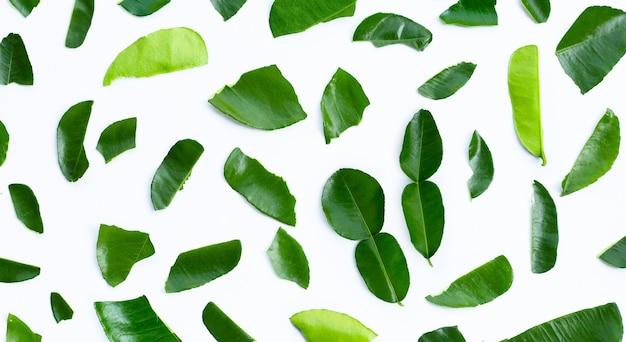 Bergamotto kaffir lime foglie erba ingrediente fresco isolato su sfondo bianco.