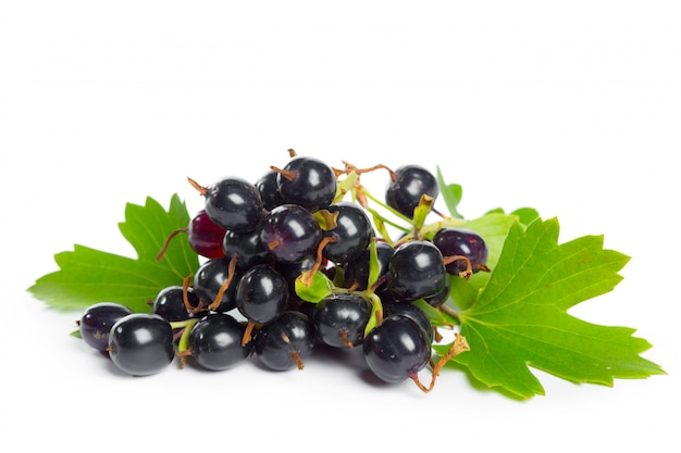 Ribes nero di bacche con foglia verde. frutta fresca, isolato su sfondo bianco.