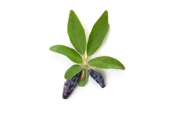 Caprifoglio blu delle bacche con le foglie verdi isolate su un fondo bianco.