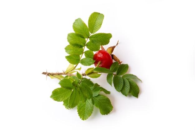Bacca rosa selvatica con foglie isolate su uno sfondo bianco vitamina c.