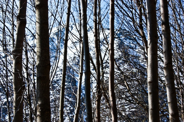 Bella vista sulle alpi attraverso la foresta, ottima per la carta da parati