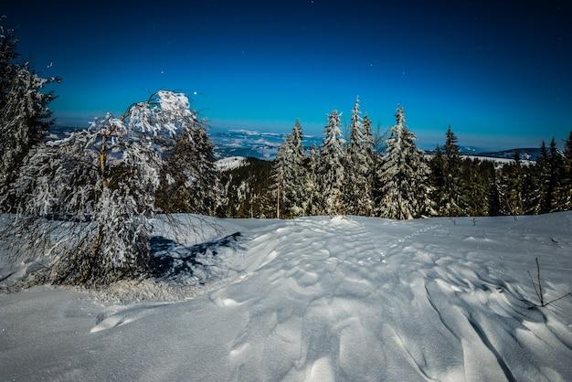 Incantevole paesaggio magico di abeti innevati che crescono tra cumuli di neve sulle colline contro un cielo notturno stellato blu. concetto di una bella foresta notturna. copyspace