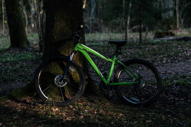 Bicicletta nella foresta autunnale vicino alla quercia in una bella giornata di sole