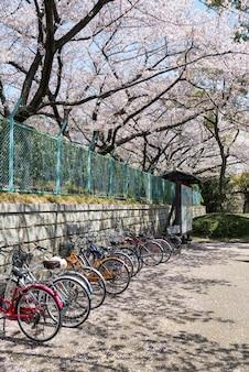 Parcheggio biciclette sul sentiero sotto gli alberi di ciliegio o sakura bianco che fiorisce nella città di nagoya, giappone. bicicletta da corsa per il trasporto in città in primavera.