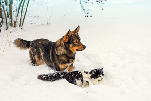 Grande cane e gatto bianco e nero che giocano nella neve