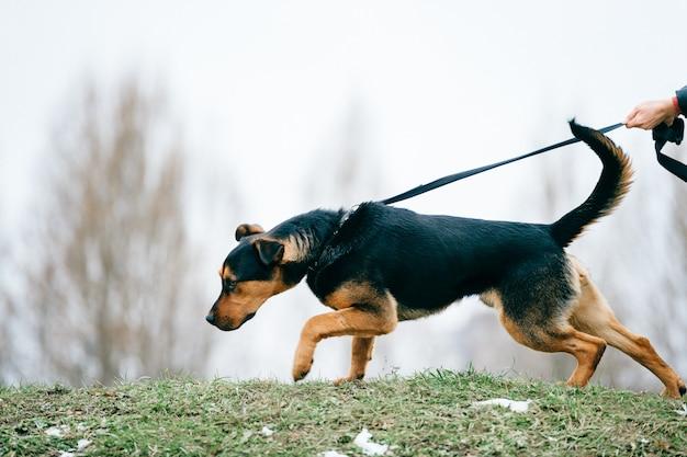 Grande cane che cammina con il proprietario all'aperto