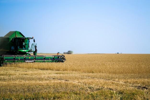 Grande macchina mietitrebbiatrice verde che lavora in un campo di girasoli che falcia girasoli secchi maturi il wo...