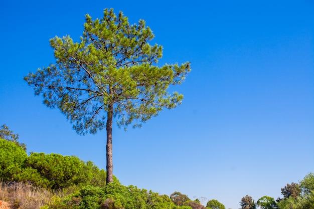 Grande albero verde sul cielo blu del fondo