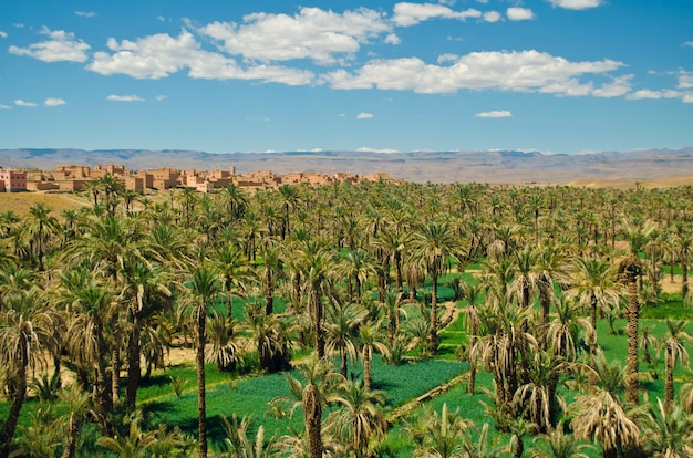 Grande oasi con palme nella valle del draa, sahara, atlas mountains, marocco