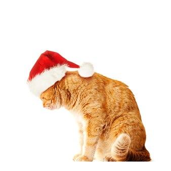 Grande gatto arancione che indossa il cappello di babbo natale isolato su sfondo bianco