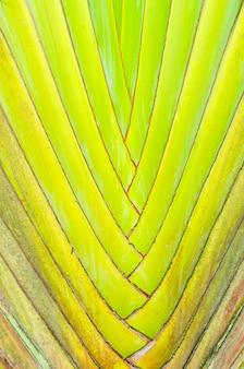 Primo piano astratto dei rami pieganti della grande palma