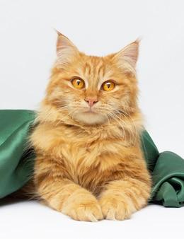 Grande gatto rosso sotto la coperta verde