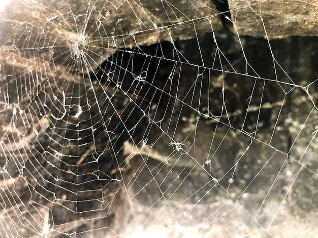 Grande ragnatela sulla formazione rocciosa