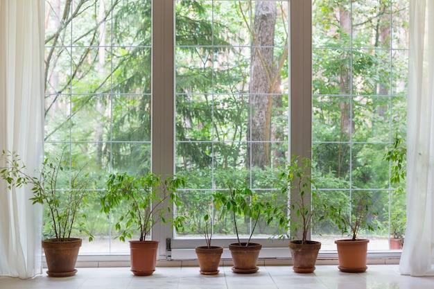 Grande finestra e piante d'appartamento con vista nella foresta estiva