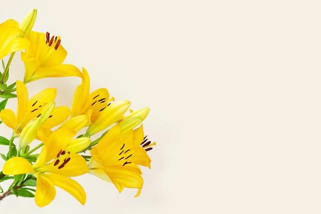 Gigli grandi fiori gialli su sfondo chiaro. copia spazio. biglietto di auguri floreale, piatto laici.