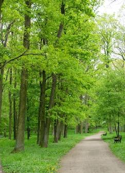 Pista ciclabile o percorso a piedi in campagna nel vecchio parco verde. vicolo primaverile con castagne e querce