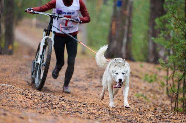 Bikejoring dog mushing race. i cani da slitta husky tirano una bicicletta con il musher del cane. concorso d'autunno.