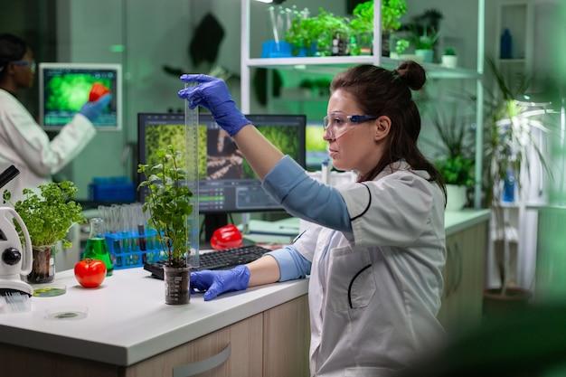 Medico scienziato biochimico che misura l'alberello verde utilizzando il righello che analizza la pianta geneticamente modificata durante l'esperimento di botanica. team di scienziati multietnici che lavorano nel laboratorio biologico dell'ospedale