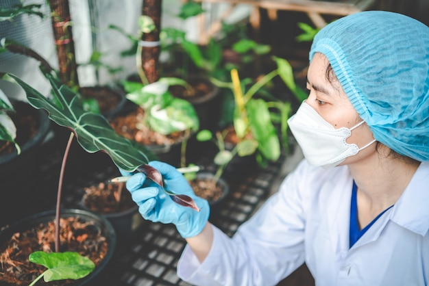 Scienziato di biologia che lavora per ricercare una pianta di crescita in serra agricola, tecnologia di scienza organica della natura o biotecnologia in laboratorio di botanica, persone che esaminano verdura per l'industria alimentare