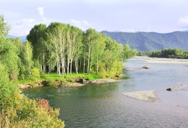 Boschetto di betulle sul pendio della sponda del fiume nei monti altai sotto il cielo blu siberia