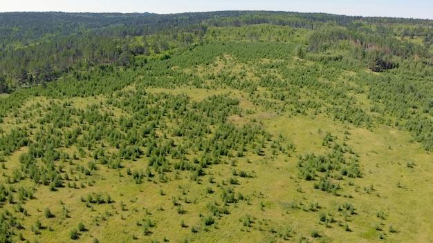 Boschetti di betulle e boschi giovani circondano prati verdi con colline