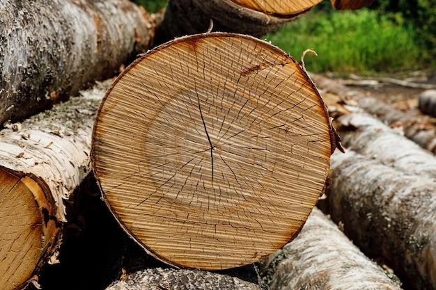 I tronchi di betulla giacciono accatastati in natura. foto di alta qualità