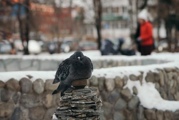 Uccello sullo sfondo della recinzione rotonda ricoperta di neve