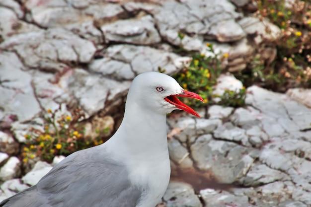 Colonia di uccelli nel villaggio di kaikoura in nuova zelanda