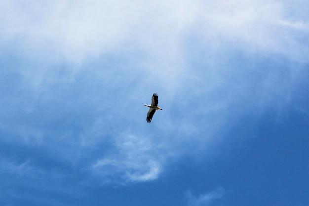 Gru di uccelli sul nido, tema degli animali della fauna selvatica, cielo blu e luce diurna