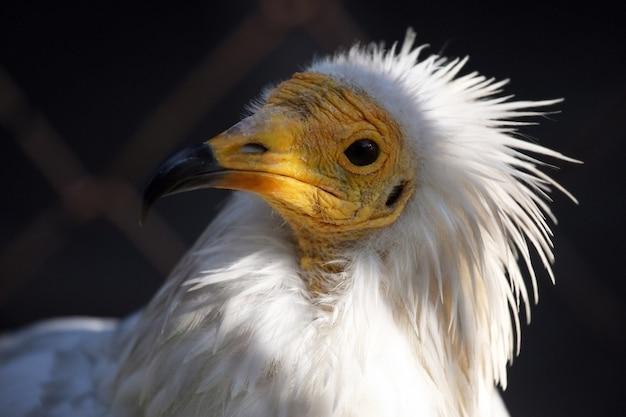 Un uccello della famiglia delle aquile
