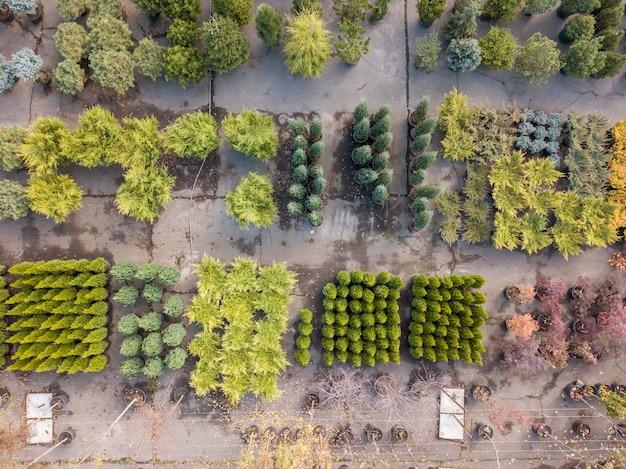 Vista a occhi di uccello dal drone sopra il centro giardino con motivi vegetali da diversi alberi e cespugli. vista dall'alto.