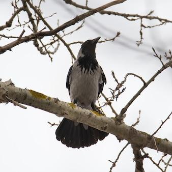 Un uccello è seduto su un albero