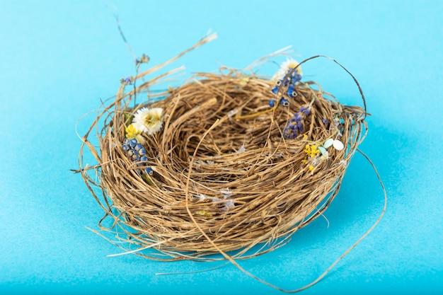 Bird nest sulla superficie blu
