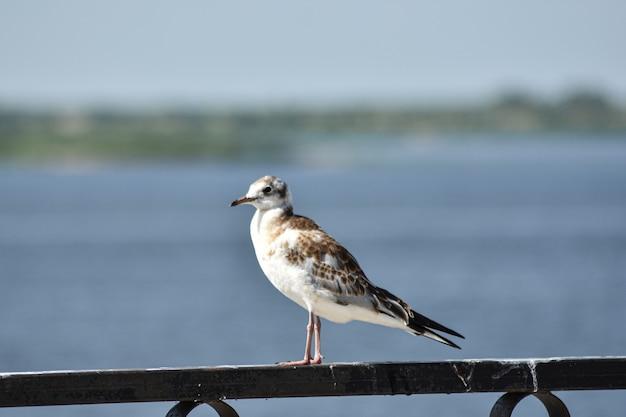 Primo piano dell'uccello sulla riva del fiume