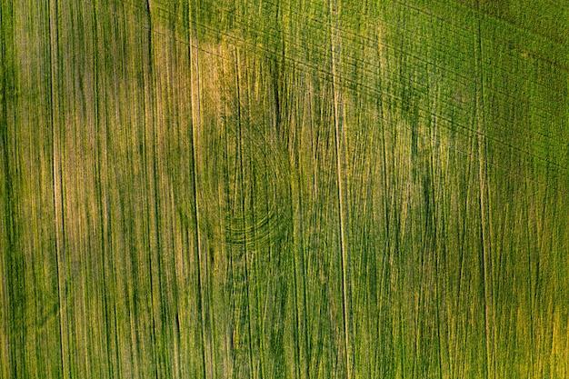Vista dall'alto di un campo verde. campagna di semina in bielorussia