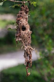 Nido d'uccello vuoto appeso sull'albero in giardino.